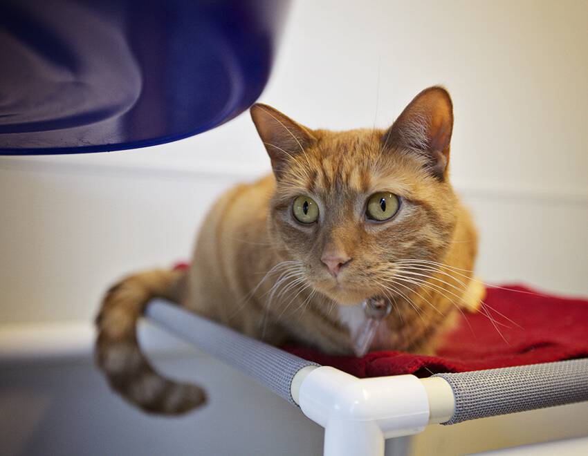 Humane League of Lancaster County Pet of the Week