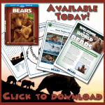 Disneynature Bears free printable activity sheets