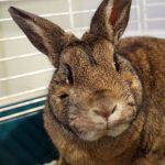 Humane League of Lancaster County Pet of the Week: Meet Bunny-Boo!
