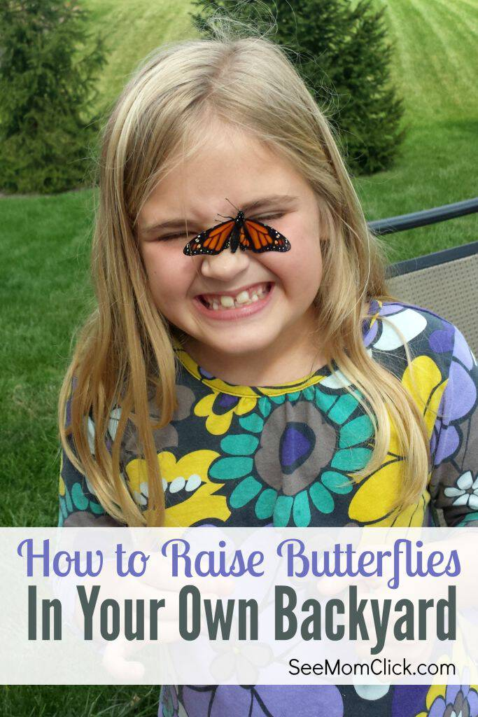 Want to know how to raise butterflies in your own backyard? I've been doing it for years and it's simple, educational summer fun. All kids, not just the butterfly lovers, will enjoy watching caterpillars change into butterflies and releasing them!