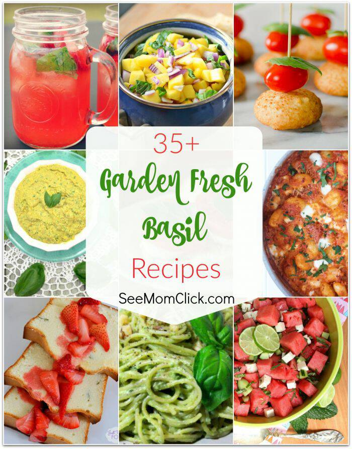 Are you growing basil in your garden and not sure what to do with all of it? I have gathered 35+ fresh basil recipes to help you use it up!