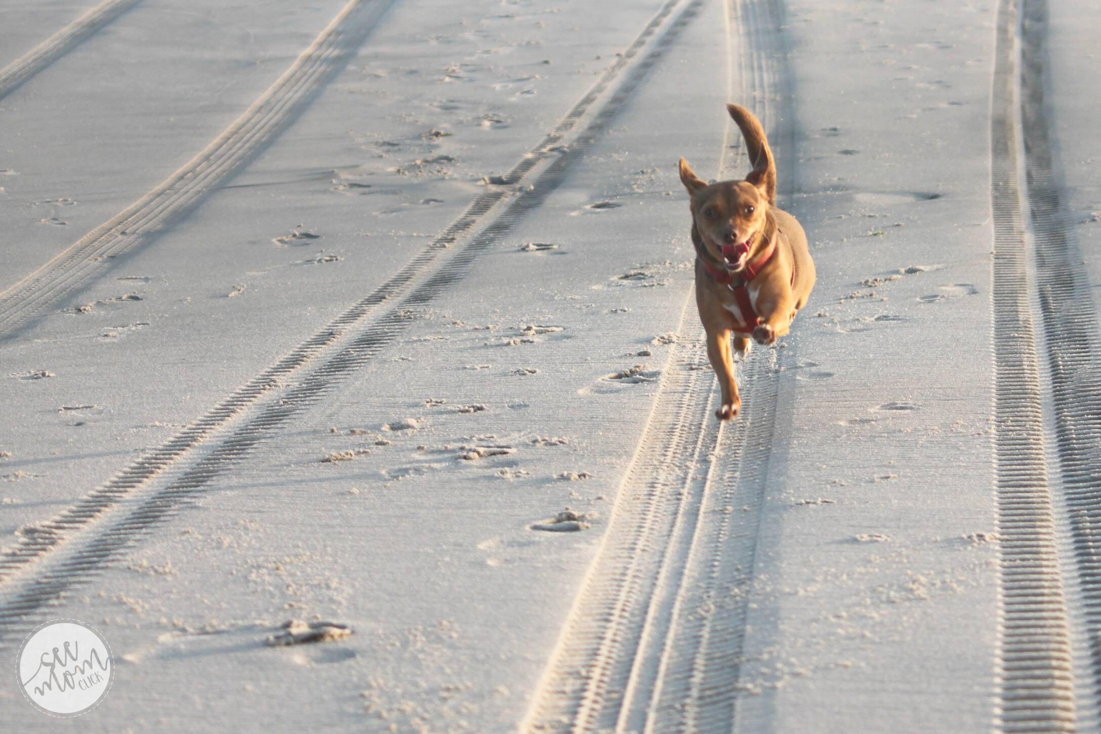 beach-running-dog