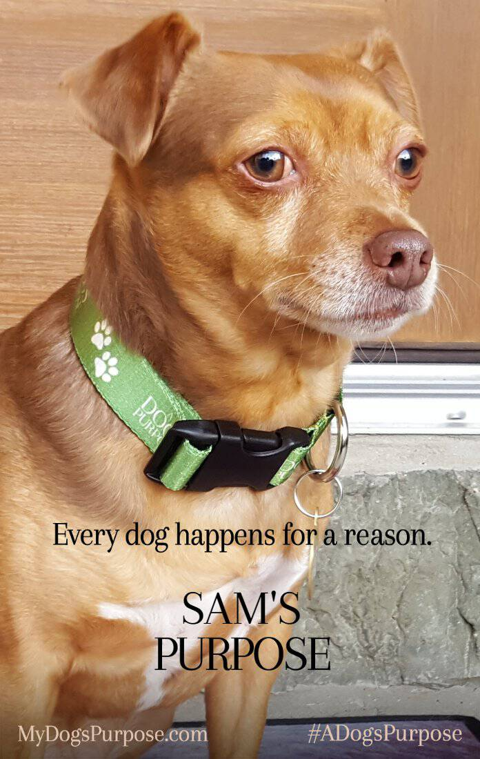 Every dog happens for a reason! What's your dog's purpose? Here's my dog Sam's, plus the scoop on A Dog's Purpose, in theaters January 27!