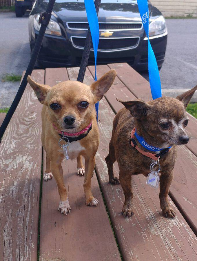Meet Consuela and Bella! These girlies are looking for a forever home and are the Humane League of Lancaster County Pets of the Week. Come take a look!